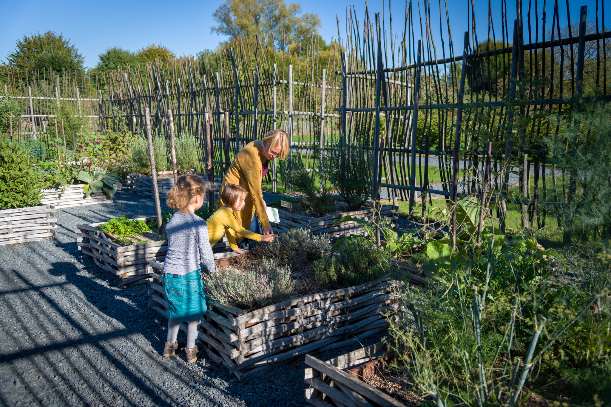 Discovering the ideal vegetable patch