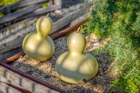 moestuin-a-bezoek-a-Saumur